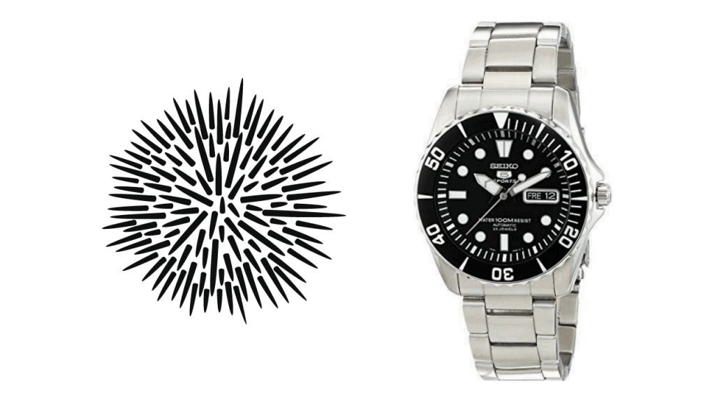 A  picture of a sea urchin and a photo of a Seiko Sea Urchin SNZF17